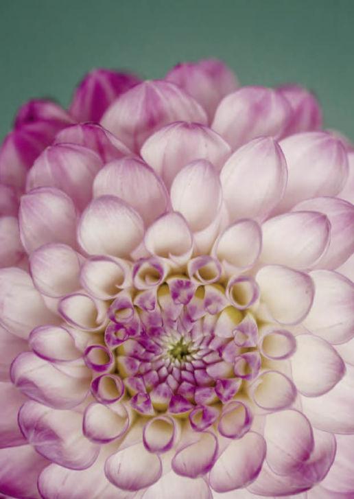 flower macro ALT TEXT