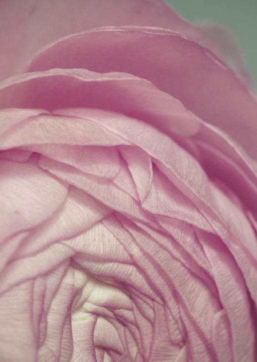 flower zart - Alt Text