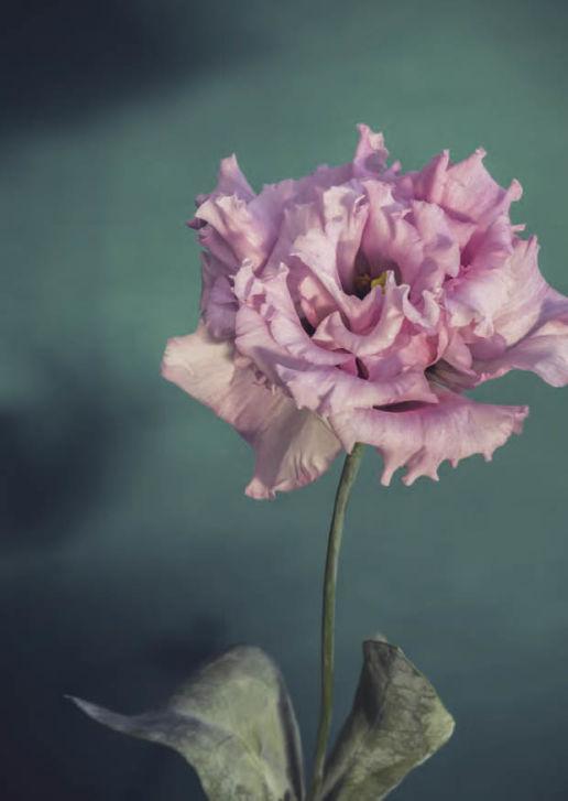 flower rosa -alt Text